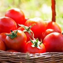 Des tomates de Provence soigneusement sélectionnées.